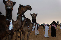 Camel Beauty Contest outside of Abu Dhabi where camels are decorated with tassels and appear to smile for the camera.  Camel beauty is judged on shape and size of the head, neck, humps, and toes.