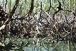 Heron, Mangroves, Los Haitises