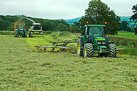 Contractors forage harvesting grass, Marton, Welshpool, Powys....Copyright..John Eveson, Dinkling Green Farm, Whitewell, Clitheroe, Lancashire. BB7 3BN.01995 61280. 07973 482705.j.r.eveson@btinternet.com.www.johneveson.com