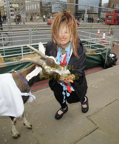 Elizabeth Emanuel.attended the International Widows Day - Celebrity Goat Walk, London Bridge, London, England, 23rd June 2012..full length  black feeding stroking blue red hair over face goat animal  .CAP/CAN.©Can Nguyen/Capital Pictures.