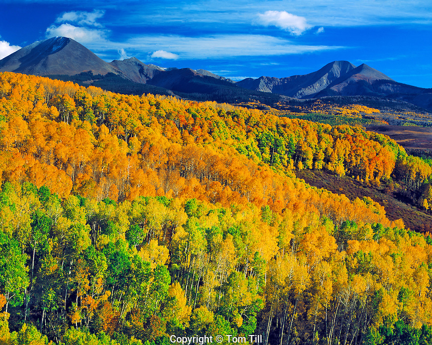 Aspen in the La Sal Mountains, Manti La Sal National Forest, Utah  Near Warner Lake  View toward Gold Basin  October