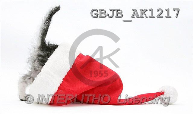 Kim, CHRISTMAS ANIMALS, photos(GBJBAK1217,#XA#) stickers