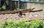 Man drying fish at the coast near Galle, Sri Lanka, Asia