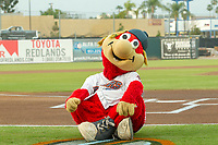 Inland Empire 66ers mascot Bernie entertains fans prior to the game at San Manuel Stadium on April 5, 2018 in San Bernardino, California. (Donn Parris/Four Seam Images)