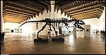 Museo di Scienze Naturali. Immagine appartenente al progetto fotografico Vita da Museo di Marco Saroldi.