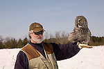 Great Gray Owl, Strix nebulosa