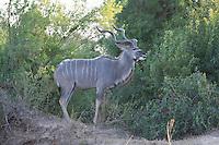 July 17, 2012: \  in Kruger National Park in South Africa