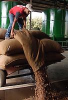 Raccolta e lavorazione delle nocciole nel consorzio..Harvesting and processing of nuts in the consortium....