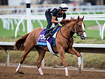 DEL MAR, CA - NOVEMBER 01: Good Magic, owned by eFive Racing Thoroughbreds & Stonestreet Stables, LLC and trained by Chad C. Brown, exercises in preparation for Sentient Jet Breeders' Cup Juvenile at Del Mar Thoroughbred Club on November 1, 2017 in Del Mar, California. (Photo by Kazushi Ishida/Eclipse Sportswire/Breeders Cup)