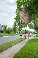 Unsuspecting Children Approaching an active Wasp Nest.  Selective focus on the Hive.