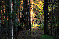 Morning sunlight penetrates the thick woods along a trail at Isle Royale National Park in Michigan USA.