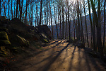 Winter forest path, Parc Natural de Montseny, Catalonia