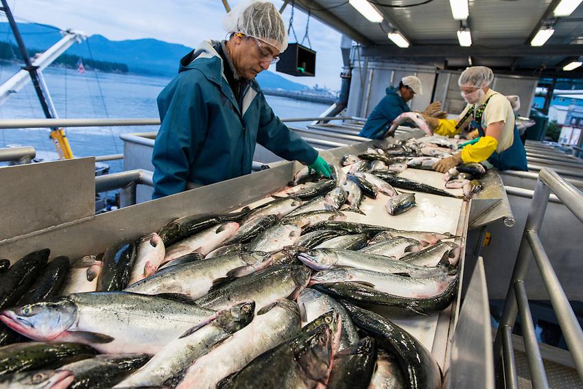 Sorting the last catch of the season. Alaska General Seafoods. Ketchikan Alaska.  2017