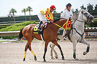 Exclusively Maria on post parade for The Azalea Stakes (G3), Calder Race Course, Miami Gardens Florida. 07-07-2012.  Arron Haggart/Eclipse Sportswire.