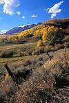 Fence and autumn quaking aspen below The Anthracite Range, Gunnison National Forest, Colorado