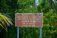 three miles east of the July 21st lava flow, end of Middle Road, Pahoa, Hawaii, Big Island of Hawaii
