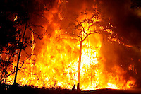 Incendio forestal. EFE