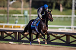 OCT 28: Breeders' Cup Juvenile Turf entrant Vitalogy, trained by Brendan P. Walsh,  at Santa Anita Park in Arcadia, California on Oct 28, 2019. Evers/Eclipse Sportswire/Breeders' Cup
