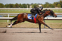 #143Fasig-Tipton Florida Sale,Under Tack Show. Palm Meadows Florida 03-23-2012 Arron Haggart/Eclipse Sportswire.