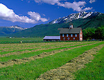 Wallowa County, OR     <br /> Field of cut hay adjacent to a red barn in the Alder Slope area of the Wallowa Valley under the Wallowa Mountains