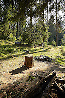 FOREST_LOCATION_90121