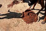 La almendra del cacao se seca al sol en el patio de la iglesia. Hay tres tipos de suelo que cambian su textura y se van usando segun el estado el cacao y el grado de calor.  Chuao. Venezuela. © Juan Naharro