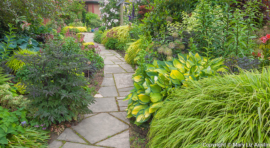 Vashon Island, WA: Stone walkway leads through a perennial garden featuring Japanese forest grass (Hakonechloa macra 'Aureola'), cimicifuga, hostas, and lilies in Froggsong garden in summer