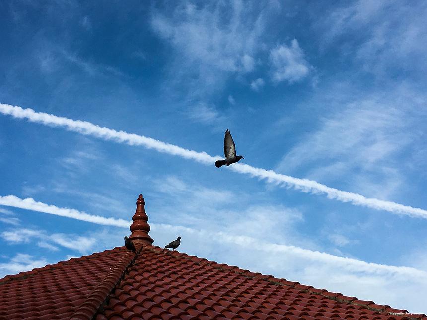 Bird flys over a roof in Thiruvananthapuram, Kerala, India  June 17, 2017 (Cellphone Photo by Cheryl Senter)