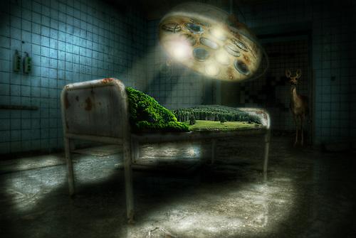 Photo manipulation<br /> Conceptual nature healing