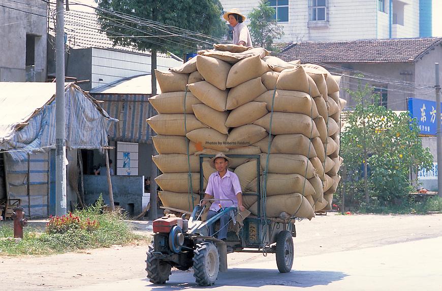 Farmer trasporting  the harvested rice sacs