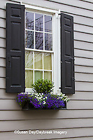 66512-00112 Window box with pansies and lobelias, Charleston, SC
