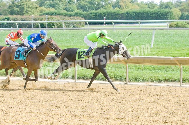 Socio d'Oro winning at Delaware Park on 9/19/12