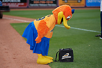 Akron RubberDucks mascot Rubberta the Duck before an Eastern League game against the Reading Fightin Phils on June 4, 2019 at Canal Park in Akron, Ohio.  Akron defeated Reading 8-5.  (Mike Janes/Four Seam Images)