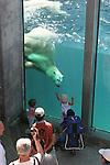 Polar bear swimming at Zoo Sauvage de St. Felicien, Quebec