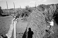 ROMANIA / Maramures / Valeni / August 2003..A husband and wife put freshly cut hay on wooden drying racks. In a day or two they will make a haystack to be used to feed their livestock in the winter...© Davin Ellicson / Anzenberger