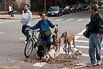 """The puppies are going to pull me, as soon as we cross the street."""
