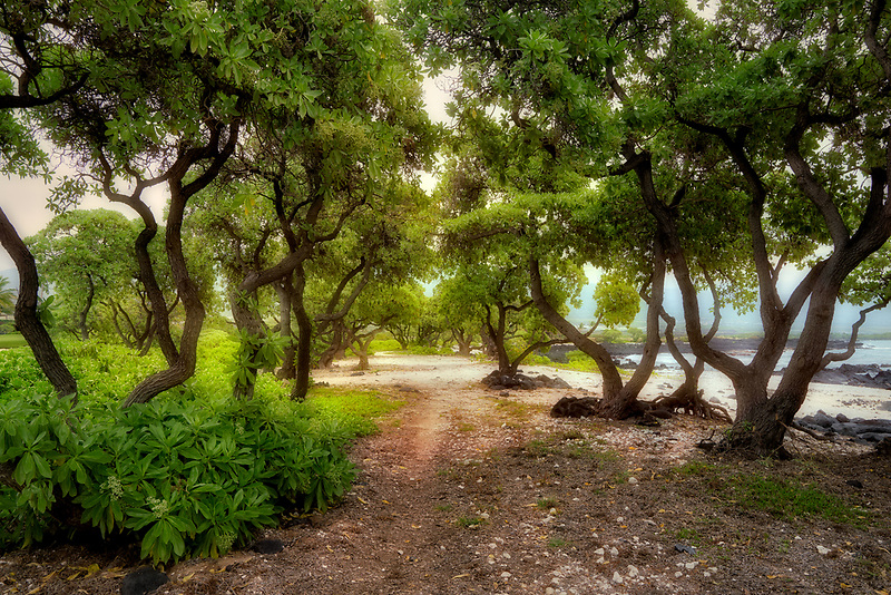 Alakahai Trail,trees and path at Kohanaiki Beach Park. Hawaii, The Big Island
