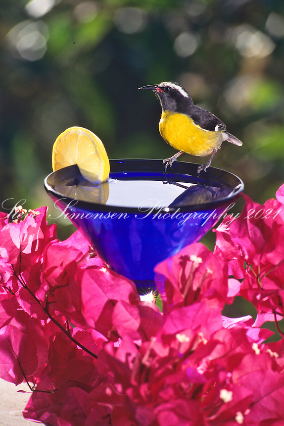 Bananaquit Cocktail