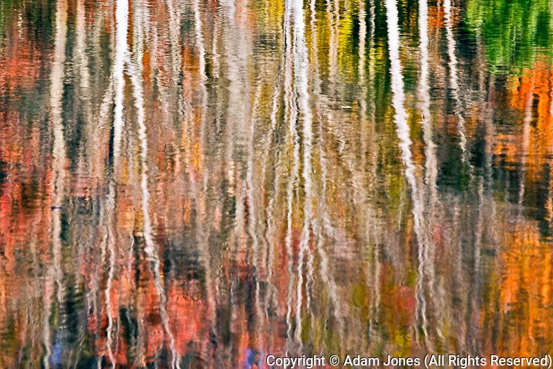 Autumn tree reflection on small strream, Bass Harbor, Maine