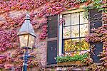 Autumn-colored ivy on Beacon Hill, Boston, MA, USA