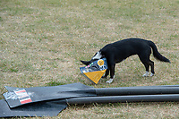 """Henley on Thames, United Kingdom, 3rd July 2018, Wednesday,  """"Henley Royal Regatta"""",  Dog's Head in and sandwich wrapper, Henley Reach, River Thames, Thames Valley, England, UK."""