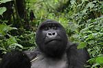 Kenya and Rwanda Wildlife