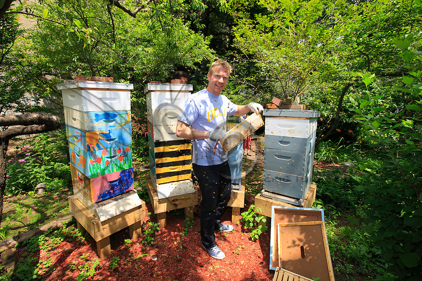 """Adam Johnson, 35 years old, associate lawyer in a New York law firm, looks after four hives in a neighboring community garden. """"The New York City Beekeepers' Association to which I belong thinks there are about a hundred hives in New York. But, that's only counting our group and the known beekeepers. If you add people of Mexican and Puerto Rican origins, who have rural roots, and other groups of young people, the figures could get as high as 500 hives."""""""