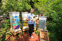 "Adam Johnson, 35 years old, associate lawyer in a New York law firm, looks after four hives in a neighboring community garden. ""The New York City Beekeepers' Association to which I belong thinks there are about a hundred hives in New York. But, that's only counting our group and the known beekeepers. If you add people of Mexican and Puerto Rican origins, who have rural roots, and other groups of young people, the figures could get as high as 500 hives."""
