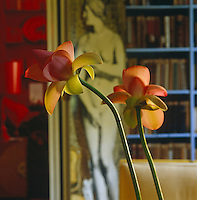 A detail of flowers in the library