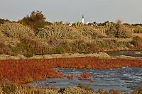 Europe/France/Poitou-Charentes/17/Charente-Maritime/Ile de Ré/Ars-en-Ré: le marais du Fier d'Ars et ses salicornes  en fond le clocher du village