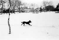 USA. Minesotta State (MN). Minneapolis. A black dog is running in the snow during the winter season. Domestic animal. 15.02.98 © 1998 Didier Ruef