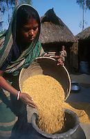 INDIA West Bengal, woman with rice grain in village / INDIEN Westbengalen, Frau mit Reis, der Reis wird vor dem Schaelen kurz aufgekocht