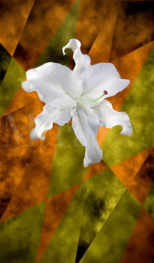 Digital illustration: white lily on a painted background.