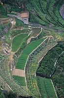 Europe/Italie/Côte Amalfitaine/Campagnie/Ravello : Vue depuis le belvédère du jardin de la villa Cimbrone (érigée au début du XIX° par Lord William Bechett) - Les plantations de citronniers